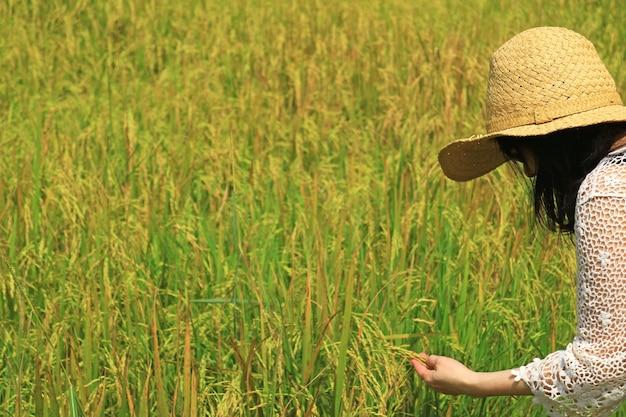 Frau, die reife reiskörner im paddy field von thailand überprüft