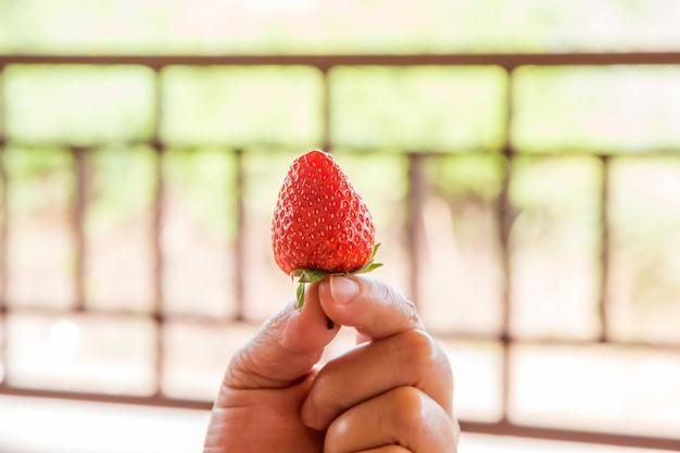 Frau, die rote frische erdbeere isst, nährt und gesundes konzept