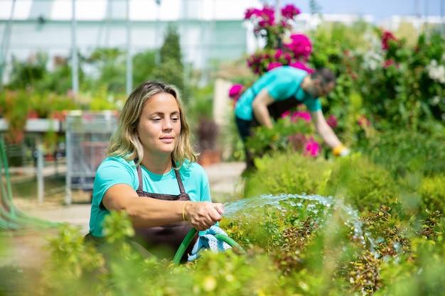 Frau, die schlauch, hockende und gießende pflanzen hält. verschwommener mann, der blumen arrangiert. zwei gärtner, die uniform tragen und zusammen im gewächshaus arbeiten. kommerzielle gartenarbeit und sommerkonzept