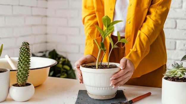 Frau, die sich um pflanze im topf kümmert