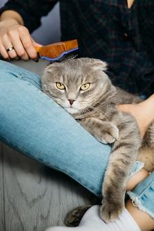 Frau, die um katze sich kümmert