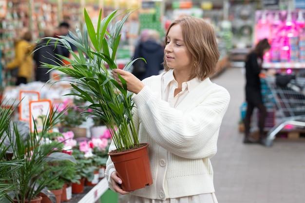 Frau, die zimmerpflanze - palme howea kentia für ihr haus im gewächshaus oder im gartencenter wählt.