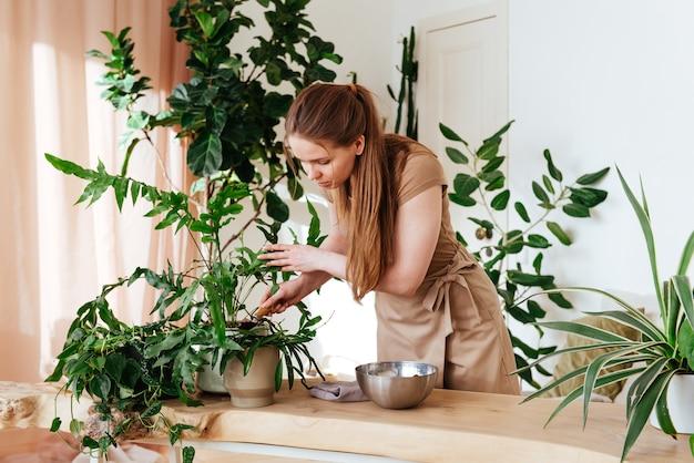 Frau gießt den boden in topf mit zimmerpflanze nah oben