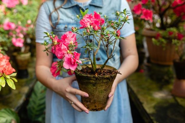 Frau halten das eintopfen grüner blätter und der roten knospenblumen-nahaufnahme. blühende azaleenblüten.
