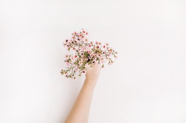 Frau hand halten wilde blumen auf weißem hintergrund. flache lage, ansicht von oben