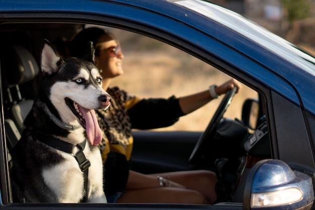 Frau im fahrzeuginnenraum mit ihrem siberian husky-hund.