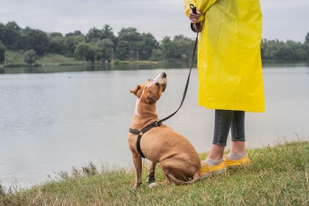 Frau im gelben regenmantel und in den schuhen geht der hund im regen am stadtpark nahe see. junge weibliche person und pitbull-terrier-welpe stehen bei schlechtem wetter nahe fluss
