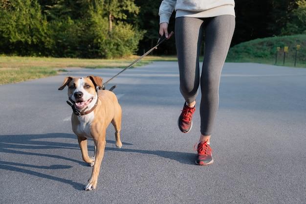 Frau im laufanzug, die mit ihrem hund joggt. junger fit weiblicher und staffordshire terrier hund, der morgenspaziergang in einem park tut