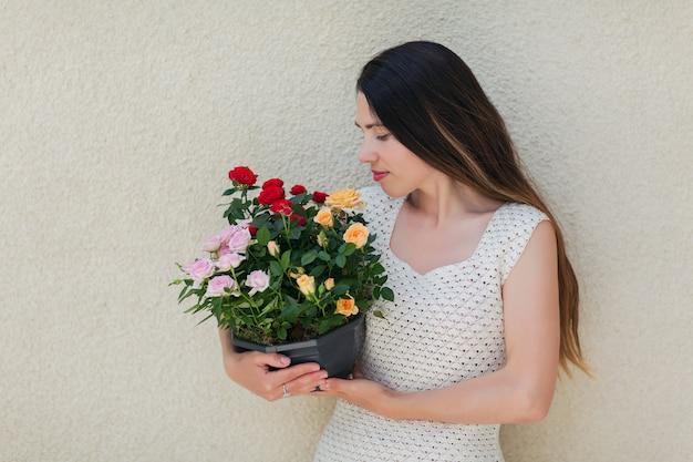 Frau im weißen kleid, die einen topf mit der schönen bunten rose in den händen hält. blühende blumen in weiblichen händen.
