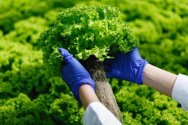 Frau in den blauen handschuhen hält grünen salat in ihren armen