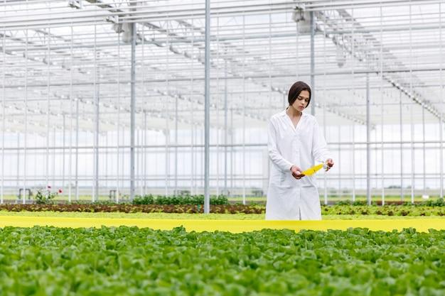 Frau in einer laborrobe mit dem grünen salat, der in einem gewächshaus steht