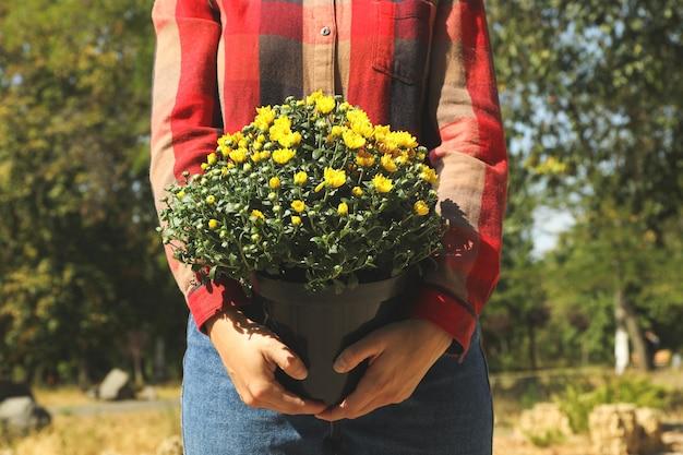 Frau in hemd und jeans halten topf mit chrysanthemen im freien