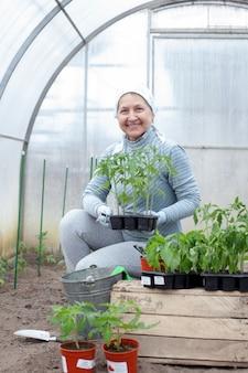 Frau landwirt transplantiert tomatensämlinge in gewächshaus
