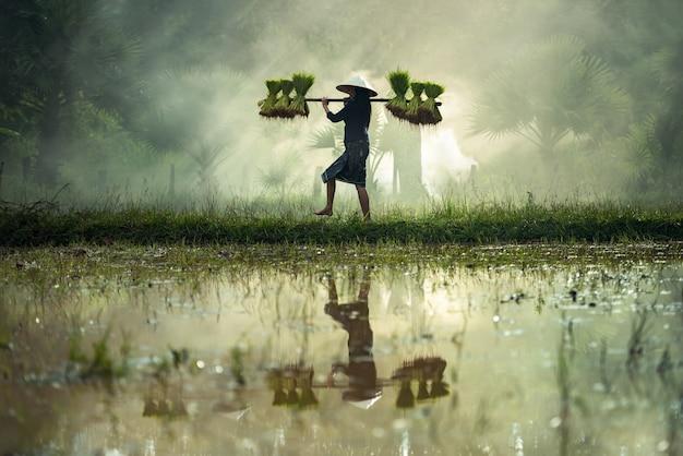 Frau landwirte bauen reis in der regenzeit an.