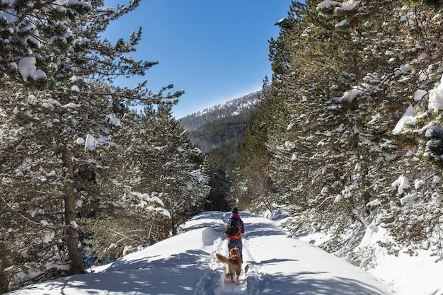 Frau mit ihrem hund, der im winter mit schneeschuhen, soriguera, lleida, katalonien, spanien aus dem schutz von