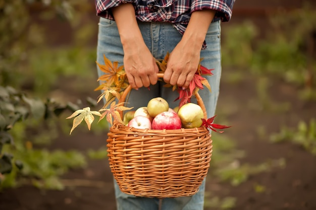 Frau mit korb voller reifer äpfel in einem garten