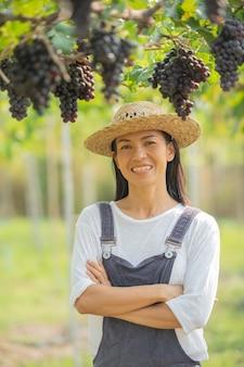 Frau mit strohhut, die schwarze trauben am weinberg erntet.