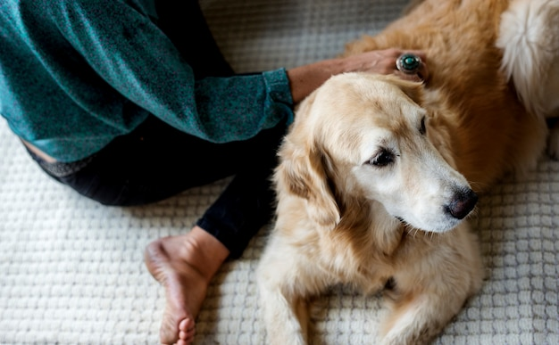 Frau petting goldent retriever hund