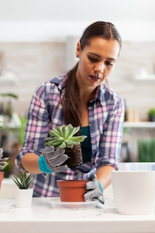 Frau pflanzt zimmerpflanze in der küche um. halten sie saftige blumen auf der kamera, die in einem keramiktopf mit schaufel, handschuhen, fruchtbarem boden und blumen für die hausdekoration gepflanzt werden.