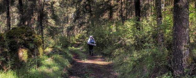 Frau praktiziert trekking im wald