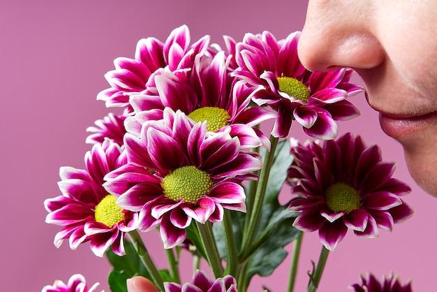 Frau riecht blumen schöne frische rosa chrysantheme, nahaufnahme, rosa gänseblümchen blumen