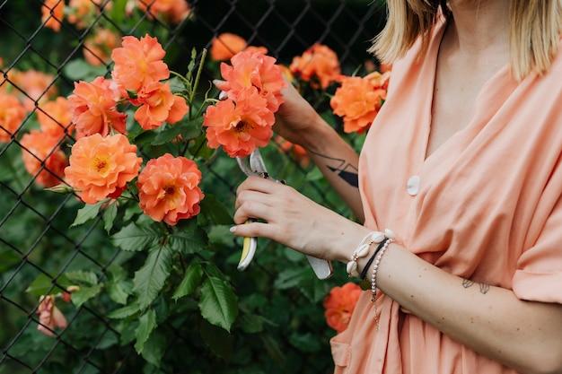 Frau schneidet eine orange rose aus dem busch