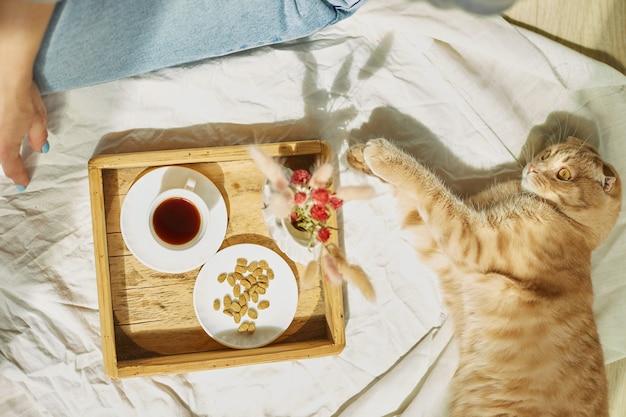 Frau sitzt auf dem bett und trinkt kaffee, katzenfütterung