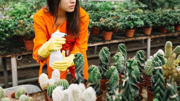Frau sprühen wasser auf pflanzen im gewächshaus