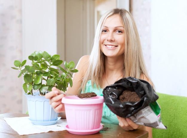 Frau transplantiert kalanchoe pflanze im blumentopf