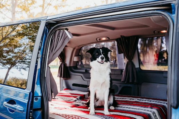 Frau und border collie hund in einem van. reisekonzept