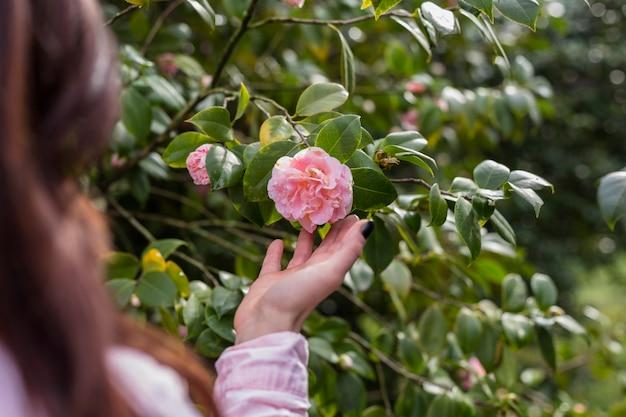 Frau, welche die rosa blume wächst auf grünem zweig hält