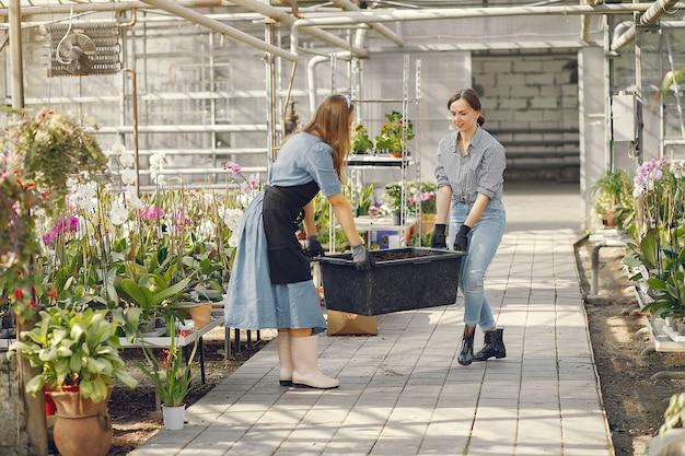 Frauen arbeiten in einem gewächshaus mit einem blumentopf