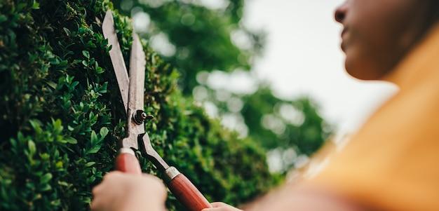 Frauen, die hecke mit handscheren beschneiden