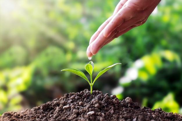 Frauen gießen mit den händen wasser, züchten setzlinge auf dem boden und wachsen pflanzen