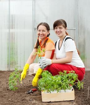 Frauen pflanzen tomatensäcke