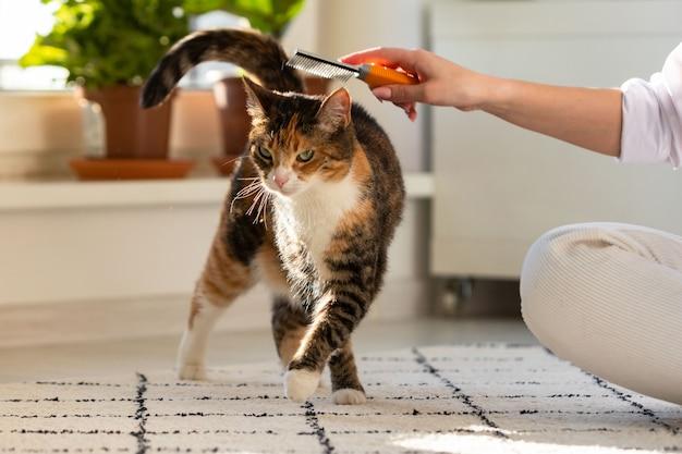 Frauenbesitzerin kämmt, kratzt ihre katze
