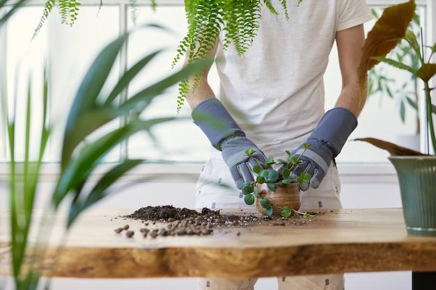 Frauengärtner, die pflanze in keramiktöpfen auf dem designholztisch verpflanzen konzept des hausgartens. frühlingszeit. stilvolles interieur mit vielen pflanzen. pflege von heimpflanzen..