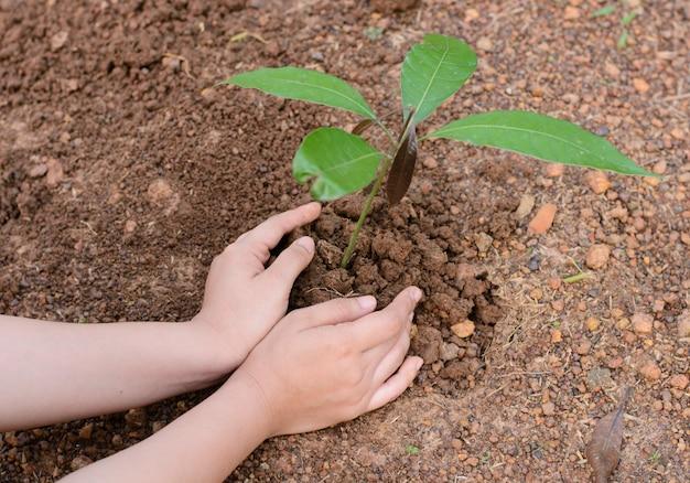 Frauenhände, die den jungen baum pflanzen