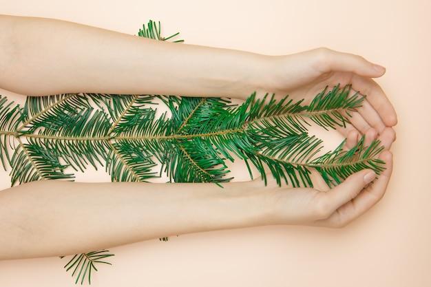 Frauenhände, die einen zweig des tannenbaums halten