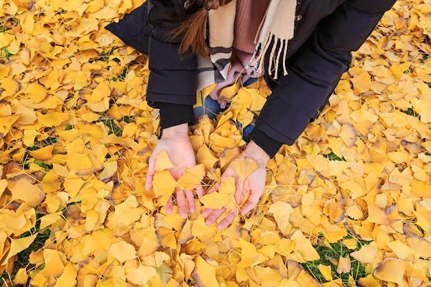 Frauenhände, die gefallene ginkgoblätter halten