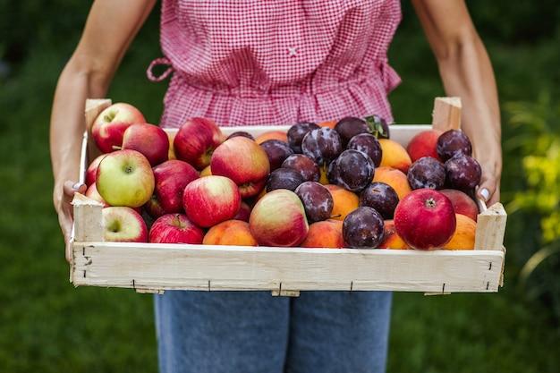 Frauenhände halten ernte von äpfeln, plumpen und pfirsichen in einer holzkiste.