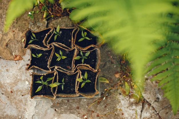 Frauenhände in handschuhen, die junge pflanze pflanzen