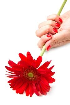 Frauenhände mit roter maniküre und roter blume