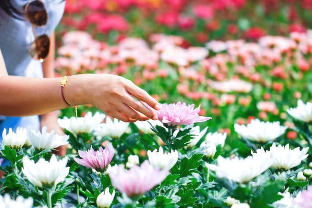 Frauenhände pflücken blumen
