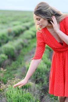 Frauenhände spielen mit lavendelblumen