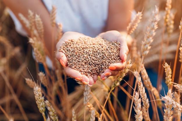 Frauenhände voll reifer weizensamen im getreidefeld bereit für die ernte