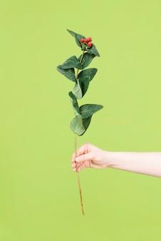 Frauenhand, die blume mit roten beeren und grünen blättern auf grünem hintergrund hält. flach liegen. blumenhintergrund.