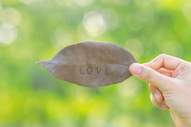 Frauenhand, die getrocknetes blatt mit lieben-text auf grünem natürlichem hintergrund hält