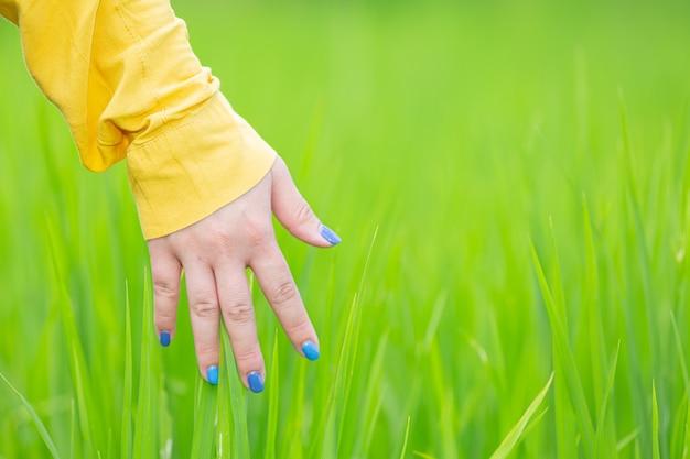 Frauenhand, die gras unter natur berührt