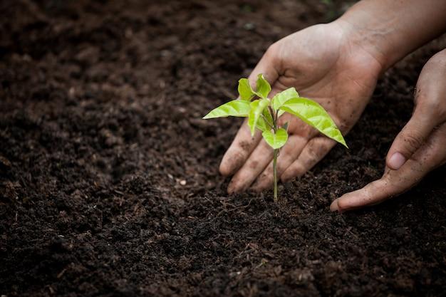 Frauenhand, die jungen baum auf schwarzem boden als abwehrweltkonzept pflanzt